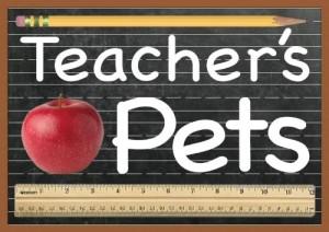 Orange Lantern Spare Parts Teachers Pets